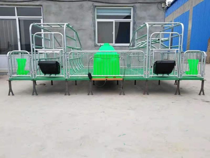 供应2019新款养猪设备猪场设备猪用产床