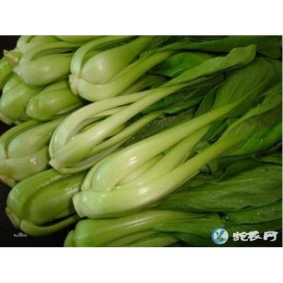 广州宏鸿青梗菜